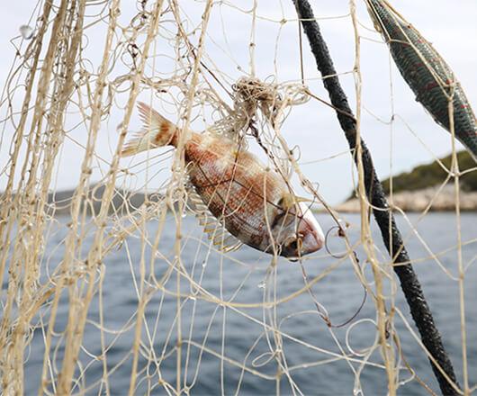 Ribarski obrt Lanđin
